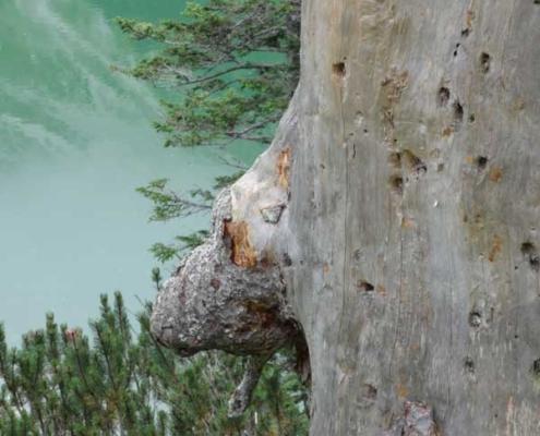 Sehschule –Natur hilft sehen